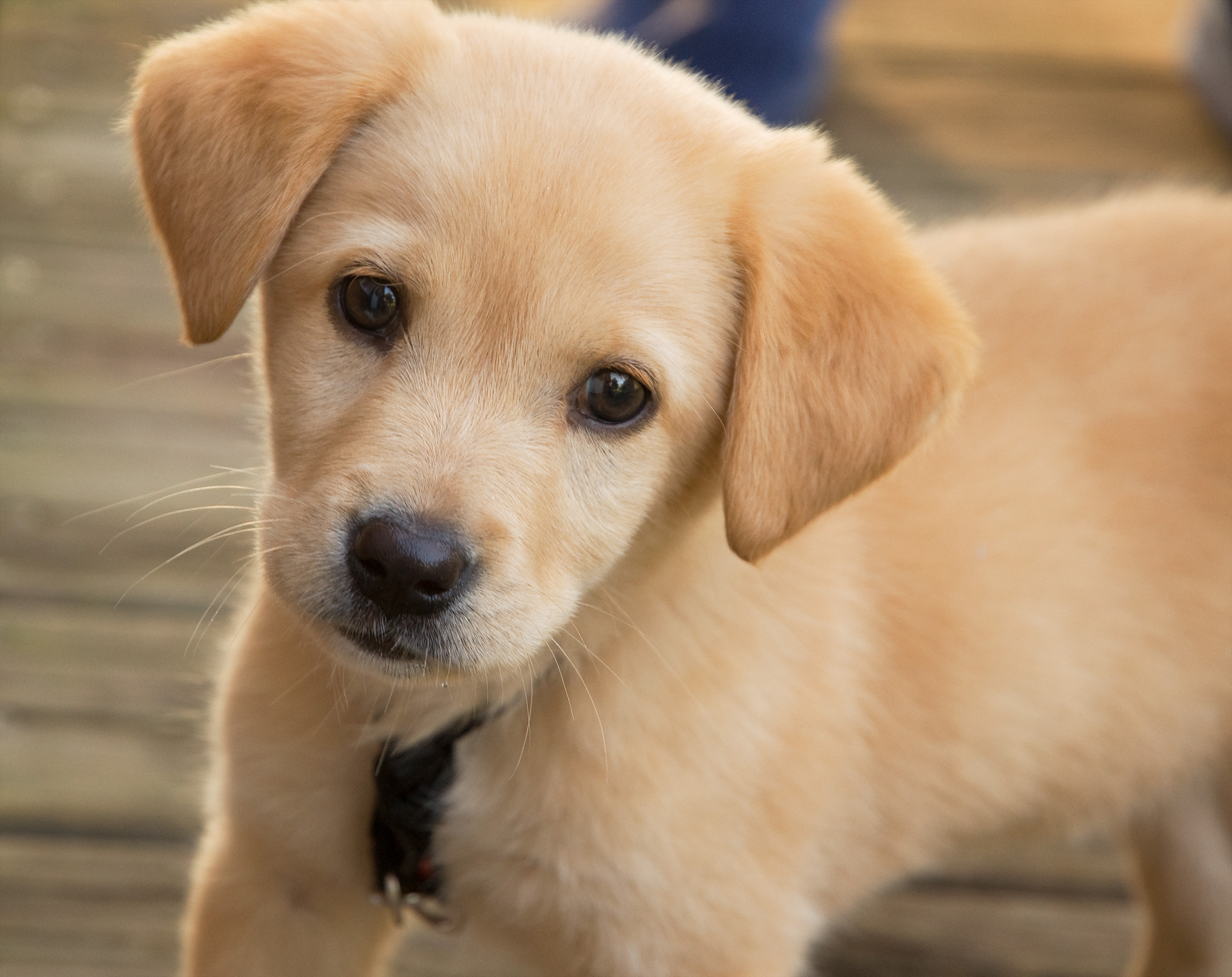 Get Ready to Bring Your New Pet Home with This Essential Guide.
