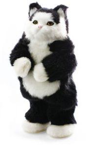 cloe the cat