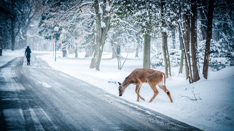 snowsnow